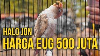 Video BURUNG DOANK 500 JUTA??!! MP3, 3GP, MP4, WEBM, AVI, FLV Juni 2019