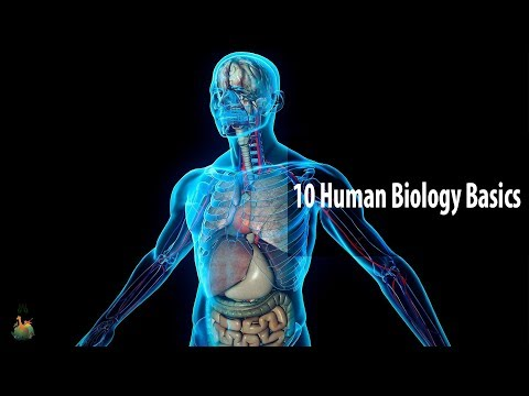 10 Human Biology Basics Everyone Should Know