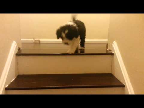 Puppy Is Scared To Go Down Steps