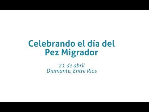 Celebrando el día del Pez Migrador - Wetlands