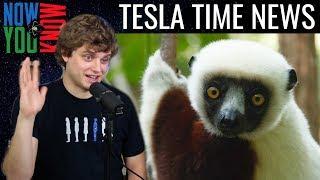 Tesla Time News - Jesse Orders a Lemur?