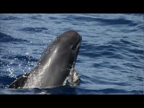 Tarifa impressions, whale watching