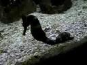 fiz este vídeo no aquário de ubatuba qd a tratadora foi alimentar os animais. Neste aquário, ela jogos artêmias (mini-camarões que nadam com as patas para cima).