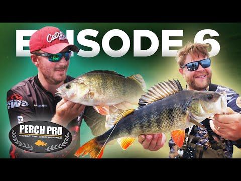 PERCH PRO 7 - Episode 6