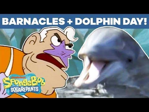 Dolphin Day + Barnacles Mashup! 🐬 SpongeBob SquarePants   #TBT