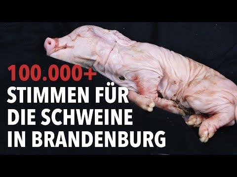 100.000 Stimmen für Schweine - Petitions-Übergabe i ...