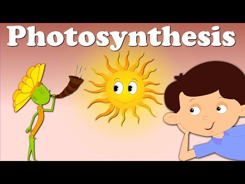 Photosynthesis | #aumsum #kids #education #science #photosynthesis