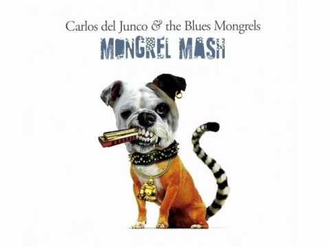 Carlos Del Junco & The Blues Mongrels - Lil' Laptop