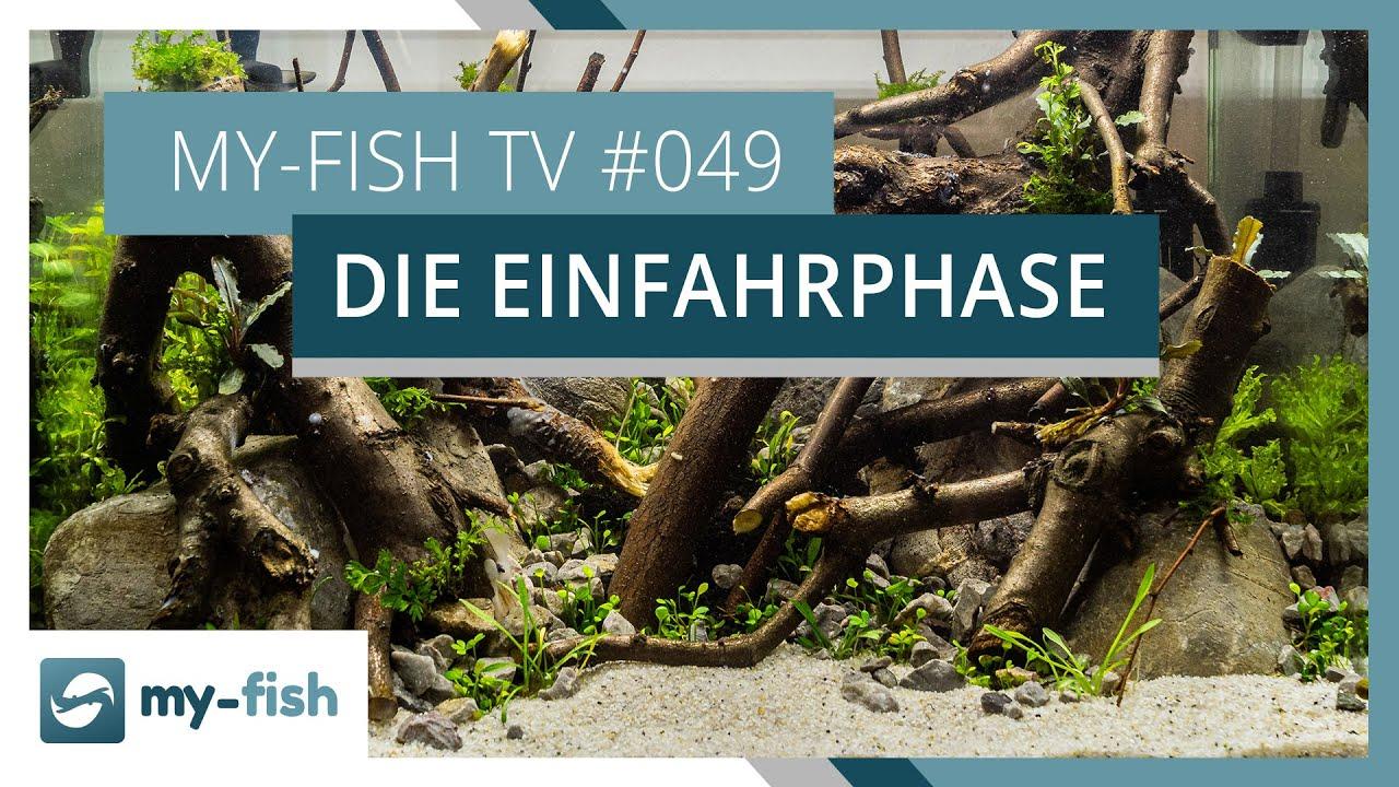 my-fish TV - Deine Nr. 1 Anlaufstelle für alle Themen rund um die Aquaristik 15