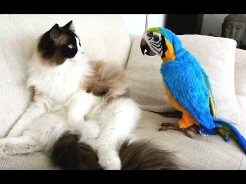 Смешные Попугаи и Кошки - новый сбрник [2016 HD] (видео)