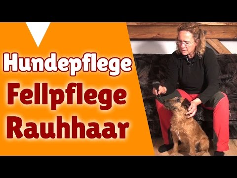 Fellpflege Hund Kurzhaar / Rauhhaar