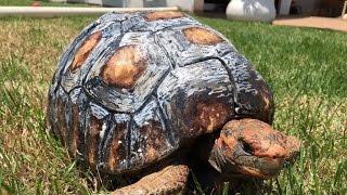 3D Tortoise Shell