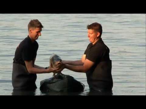 Fishing & Hunting - Palotás B & B Carphunter Bojli Team (Hungary) II.rész