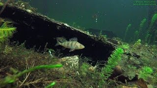 A place for fish to hide. Fish hiding in a secret place makes it harder for predators and people to spot and catch them. Fish need to protect themselves from being attacked and eaten by all kinds of predatory fish in the water and it is a lot harder to find and attack fish when they are in their hiding places.