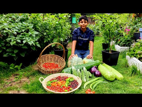 Are You Harvesting Chilli | Time To Harvest Bangladeshi vegetable (Part 3)