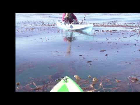 Cambria - Leffingwell Landing - kayak fishing, kayak photos, kayak videos