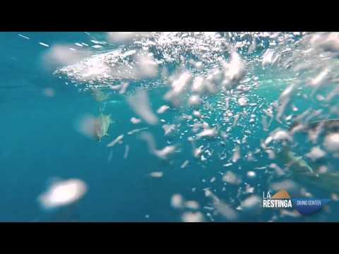 Atardeceres en el Hierro con delfines