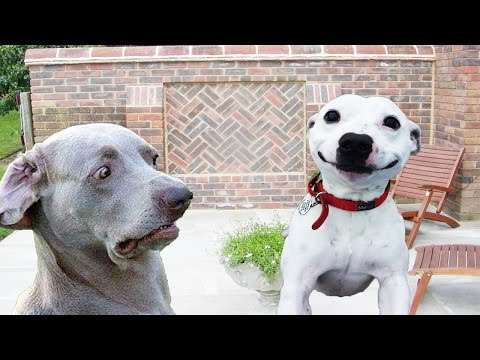 Dogs Making Funny Faces - Funny And Cute Dog Compilation
