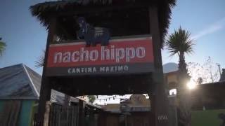 Nacho Hippo Cantina Maximo