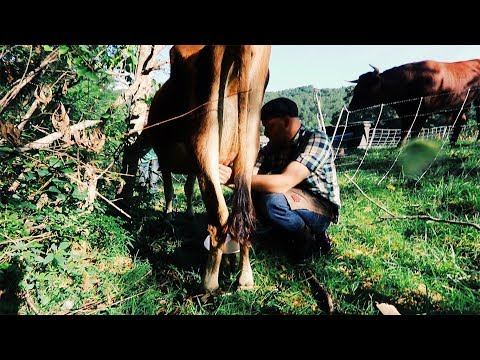 Video Milking on Pasture = BIG Game Changer | If it (actually) works download in MP3, 3GP, MP4, WEBM, AVI, FLV January 2017