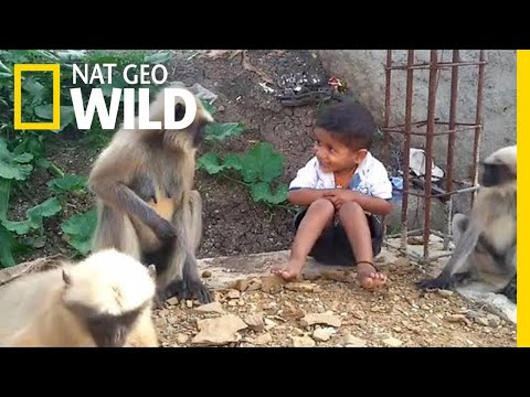 Boy And Wild Monkeys Make Unlikely Friends | Nat Geo Wild