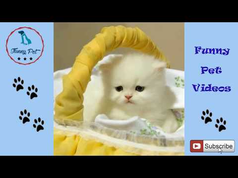 Funny Cat Videos Try Not To Laugh or Grin For Kids  Funny Cats Compilation 2018