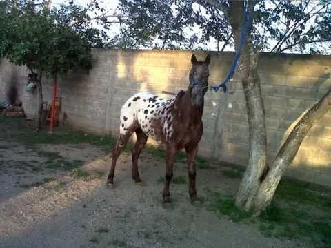 venta caballo tamaulipas: