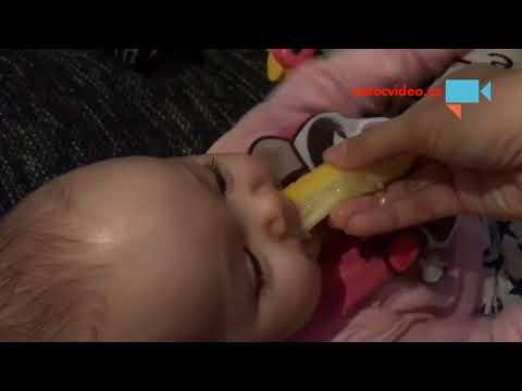 miminko vs. citron