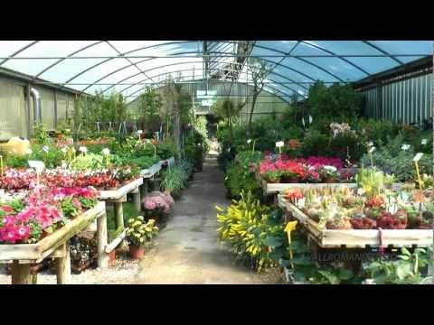 Anturios definicion videos videos relacionados con for Jardineria barcelona centro