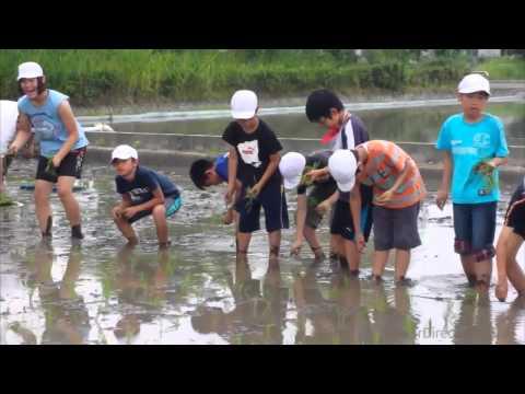 蒲池小学校の田植え