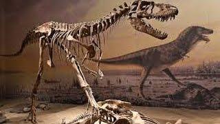 Настоящие скелеты динозавров, мамонтов и доисторических ящеров YouTubeFotoVideo