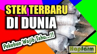 Video CARA STEK TERBARU DI DUNIA. The Best Practice to rooting the cutting. Subrcribe berhadiah bibit MP3, 3GP, MP4, WEBM, AVI, FLV November 2018