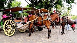 Download Video Kuda Delman Lagu Anak ❤ Naik Delman Istimewa MP3 3GP MP4
