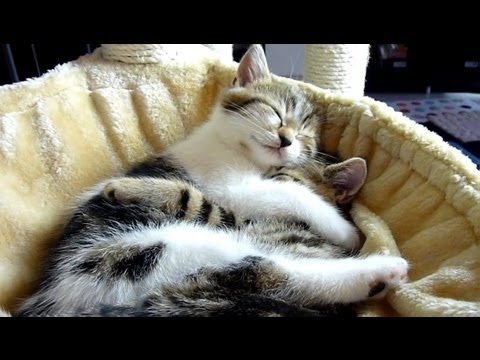 cute cats - Subscribe: http://bit.ly/FunnyCatsAndNiceFish http://www.facebook.com/pages/Funnycatsandnicefish/505394342831444 Cutest Cat Moments. Top 20 Kitten and Cat Hu...