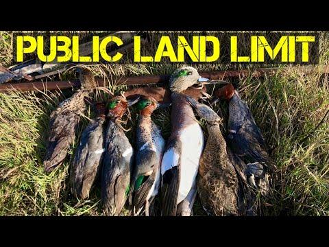 California Duck Hunt - Suisun Marsh In Some Fog