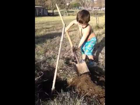 Pedro plantó un árbol en el día del árbol.