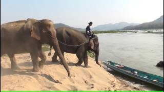 Video Luang Prabang - Elephant Village with Tourguide Viengvilay Phimmasone MP3, 3GP, MP4, WEBM, AVI, FLV Juli 2018
