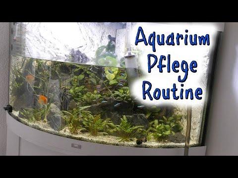 Aquarium Pflege Routine - Unsere Fische - DoJo's Spielzeugwelt
