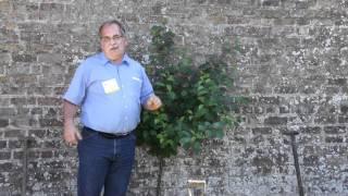 #430 Gartenshow Bloom (Irland, 2011) - Fächererziehung von Obstbäumen