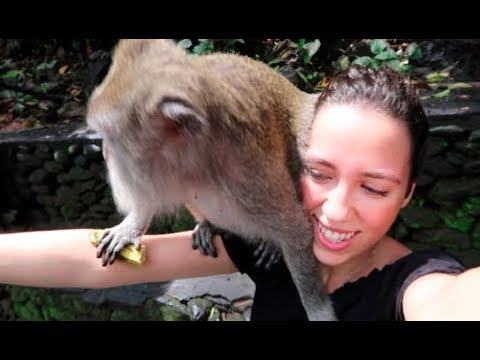 INDONESIA VLOG #8 | Monkeys, Markets And Balinese Dance UBUD (BALI)