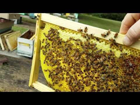How To Do Fall Honey Bee Nuc Splits