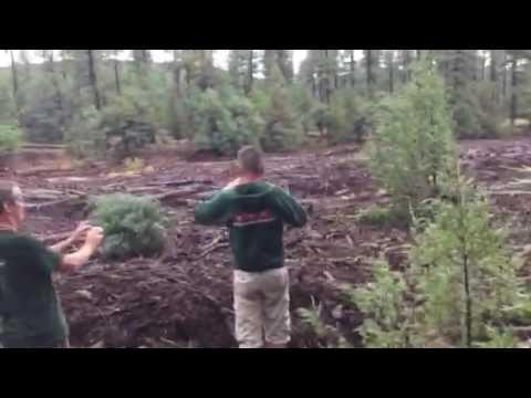 Ihmiset kuvaavat metsää — hetken kuluttua pelottava luonnonvoima vyöryy heitä kohti