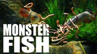 Video Feeding my fish MASSIVE WORMS | The King of DIY MP3, 3GP, MP4, WEBM, AVI, FLV Oktober 2018