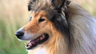 The Most Beautiful Dog Breeds