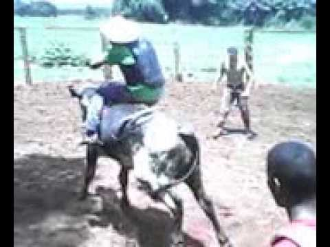 Treinamento em são josé do Xingu MT