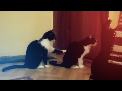 il gatto che chiede scusa al suo amico: sarà vero ??