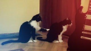 Котка, която се извинява, но какво се случва всъщност?