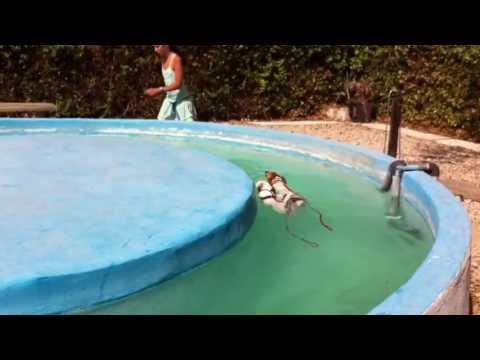 Piscina perros madrid videos videos relacionados con for Piscinas perros