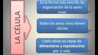 Un video para entender la organización de los seres vivos.
