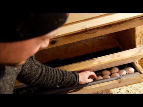Finally Clean Eggs With These Nesting Boxes